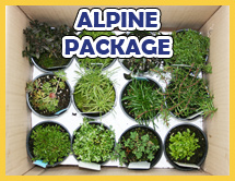 Alpine Perennials Package