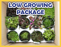 Low Growing Perennials Collection
