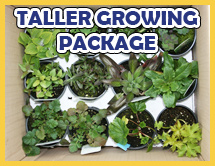 Taller Perennials Collection